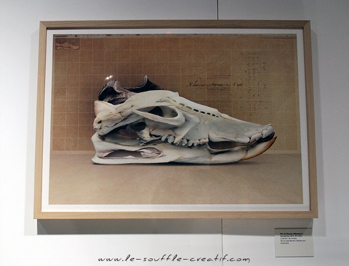 exposition-sneakers-2015-PC230650